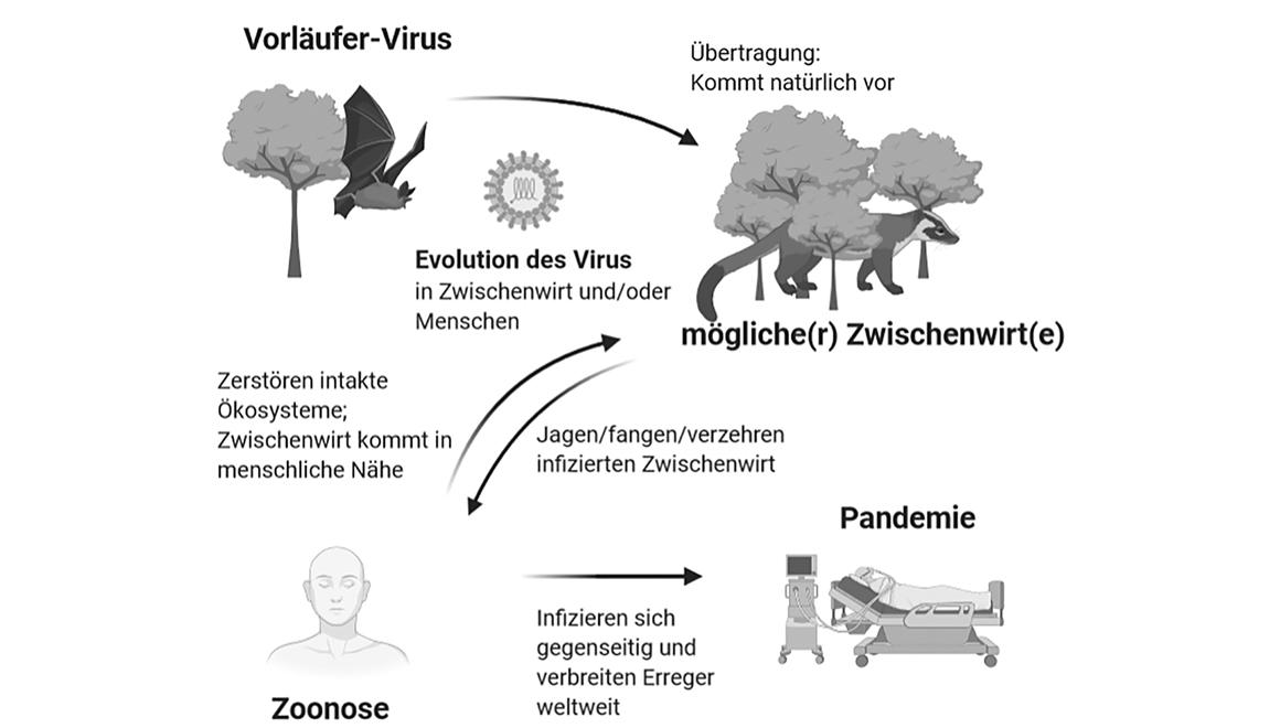 Tierbefreiung und Infektionskrankheiten