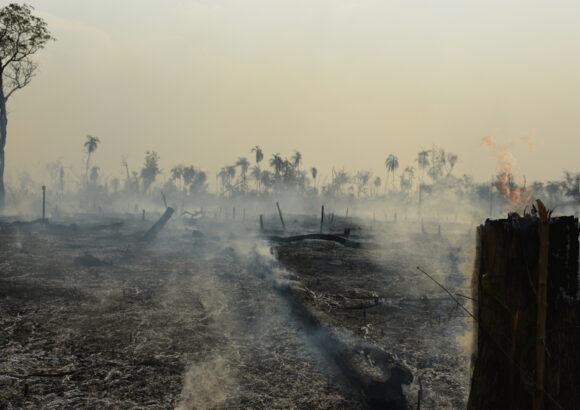 Die Corona-Krise und die Rodungen des Amazonas